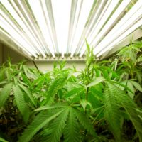 Marijuana Growing Room